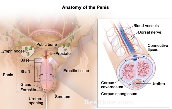 how penile cancer is treated