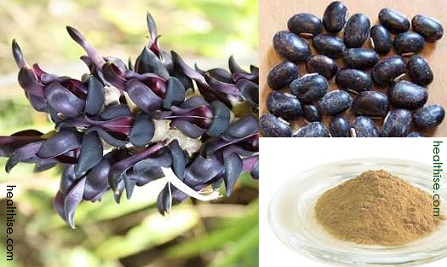 Mucuna Pruriens extract sex stimulants