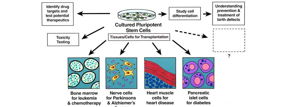 stem_cells_research