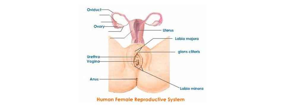 Know Women's Reproductive Health