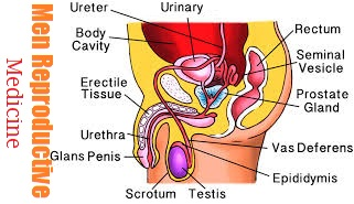 Men Reproductive Health and Homeopathy