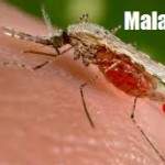 Malaria Causes, Symptoms and Home Remedies