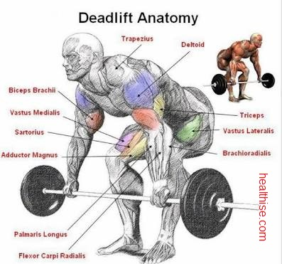 dead lift anatomy explained