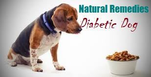 diabetes in dogs - diabetic dog natural remedies