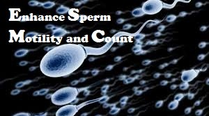 increase sperm count for male fertility
