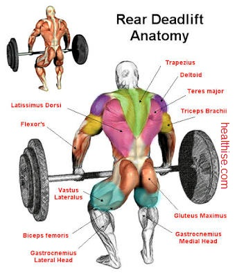 muscle building dead lift rear anatomy