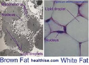 white fat vs bad fat meaning