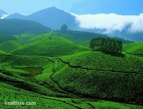 Honeymoon in Munnar - Kerala