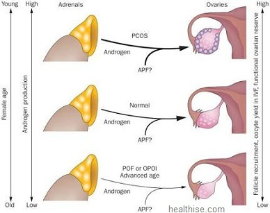 Oral contraceptives will decrease the production of ovarian androgens