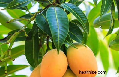 Toothache Dental pain Causes, Prevention and Ayurvedic mango leaves Natural Home Remedy