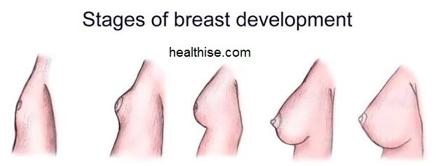 tips on breasts - boobs development