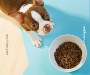 diabetic dog food