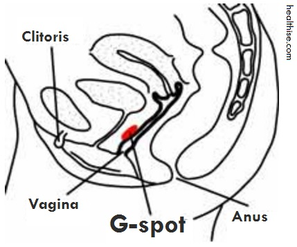 G-spot finding diagram