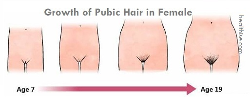growth of pubic hair in women