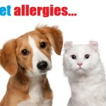 Skin Allergies in Dogs and Cats