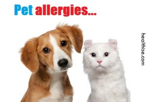 pet cat dog allergies treatment and prevention