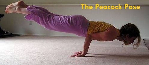 the peacock pose mayurasana weightloss