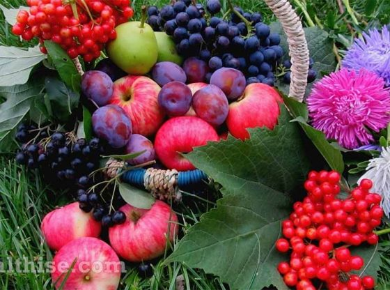 how organic natural product