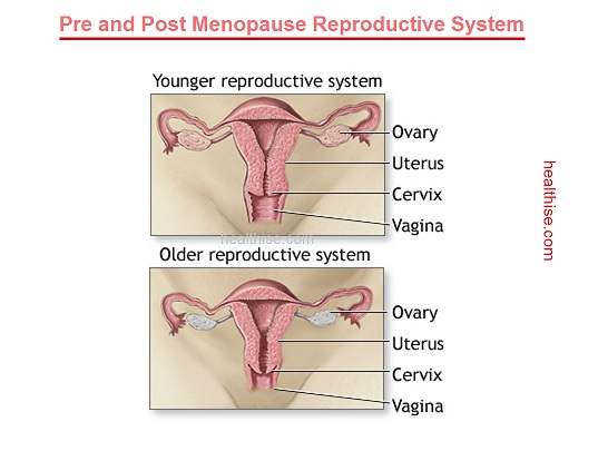 healthy menopause reproductive system
