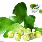 Advantages and Side Effects of Ginkgo Biloba Extract