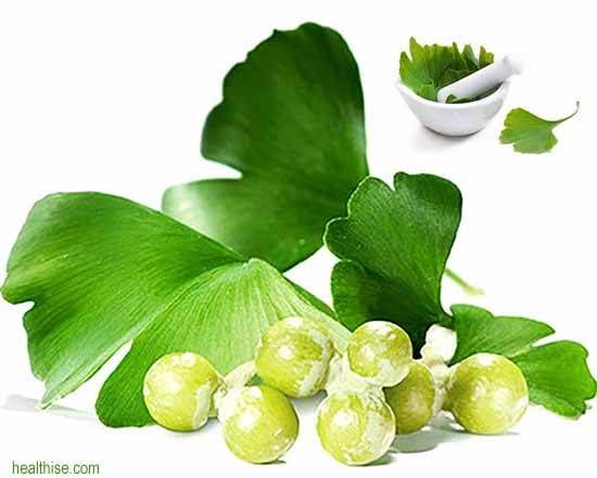 How Ginkgo Biloba Extract for Memory